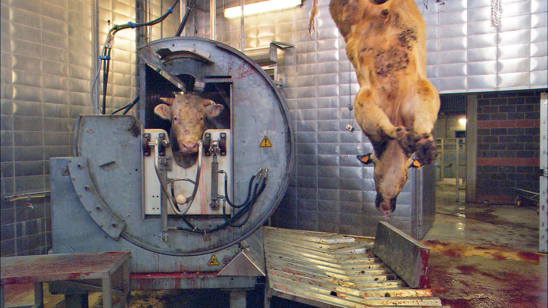 Ricemilkmaid Blog | 3 aufrüttelnde Dokus | Unser täglich Brot, Cowspiracy, Gabel statt Skalpell