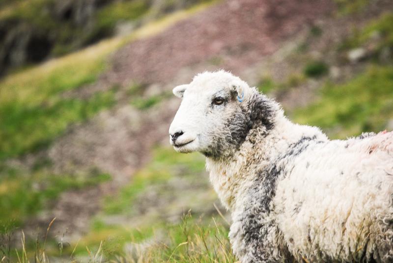 Wieso kaufen Veganer keine Wolle? Lerne alle relevanten Informationen über die Wollindustrie in diesem informativen Beitrag. Klick dich direkt zum Post durch oder speichere ihn jetzt für später!