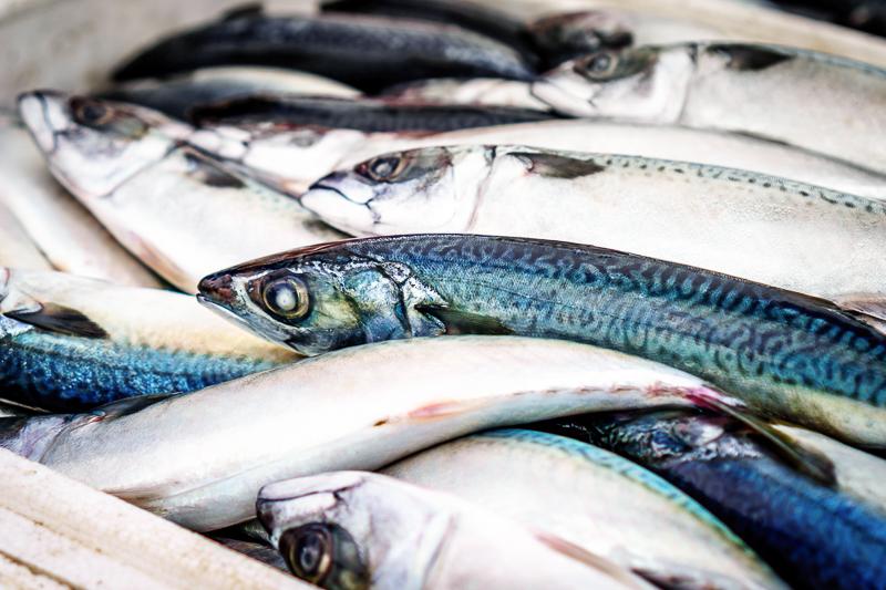 Ist Fisch gesund? In diesem Beitrag betrachten wir die gängigen Annahmen zu Fischkonsum und klären, ob dieser gesund oder ungesund sein kann. Klick dich gleich zum Beitrag!